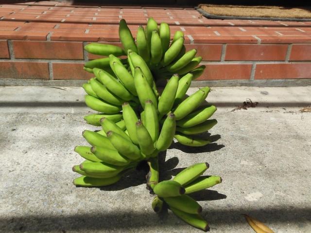 島バナナは沖縄や奄美諸島などで栽培されている国産バナナのことで甘味と酸味がかなり濃厚につまった不思議なバナナ